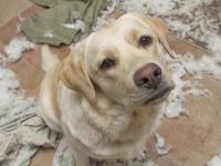 Pets, spoiled food and broken mirrors among unusual insurance reimbursements